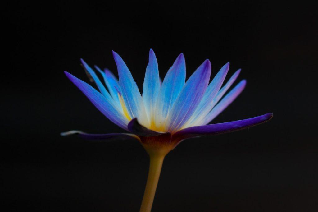Méditation guidée Pleine Conscience